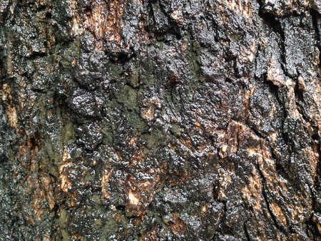 trunk  tree: tronco de ?rbol Foto de archivo