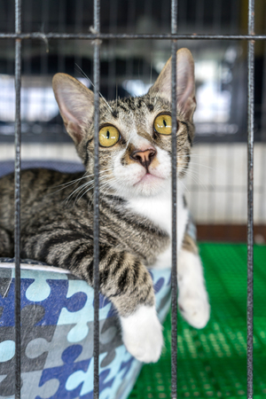 locked up in a cage: little cat in the cage looking through the bars of a cage