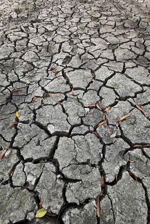 cracked earth in gray. earth without water - dry drought