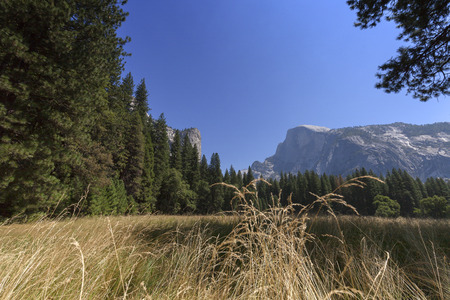 Half Dome Meadow - Afternoon sunlight on golden Half Dome meadow.