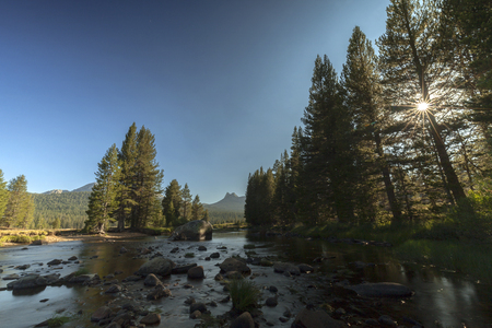 Yosemite Meadow Sunset - The sun begins to set through the trees in the meadows of Yosemite National Park. 스톡 콘텐츠