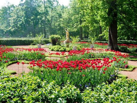 Bright colorful tulips grow in the great park