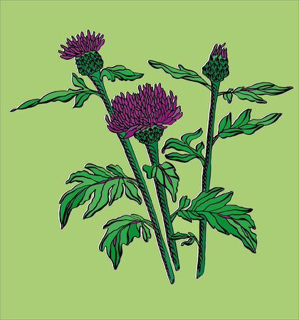 Vector illustration contour wild Flower with leaves Illustration