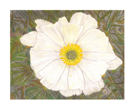 Pencil Drawing pencil illustration of white exotic flower Stok Fotoğraf