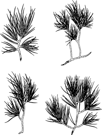 Vector Set of ink branch of a Christmas pine tree. Contour illustration