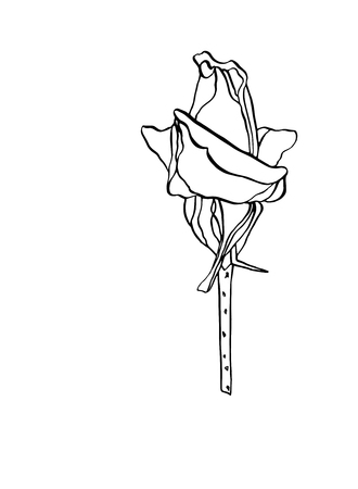 Decorative vector illustration ink drawing rose flower with leaves on white background Çizim