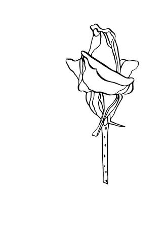 Decorative vector illustration ink drawing rose flower with leaves on white background Ilustração