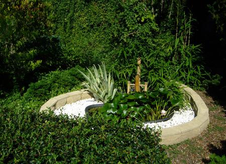 Little green water pond in botanical garden