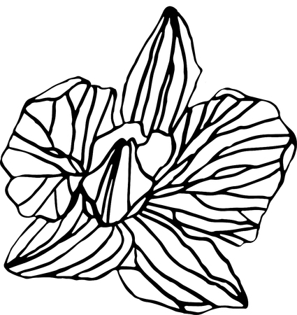 Orhid Flower vector on white background