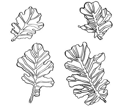 Decorative set vector illustration oak leaves with streaky on white background Çizim