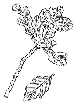 Decorative vector illustration oak leaves with streaky on white background