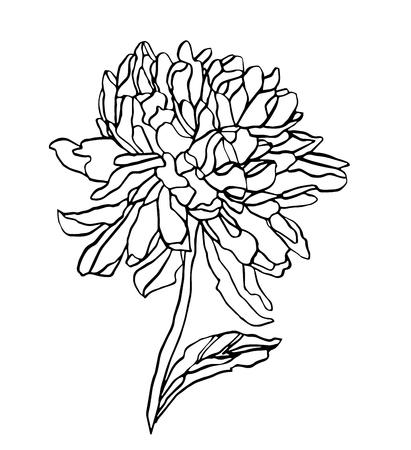 Decorative vector ink of drawing chrysanthemum flower