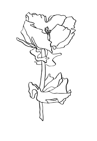 Decorative vector illustration ink drawing poppy flower with leaves on white background
