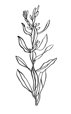 Decorative vector illustration doubled branch of leaves wild plant on white background