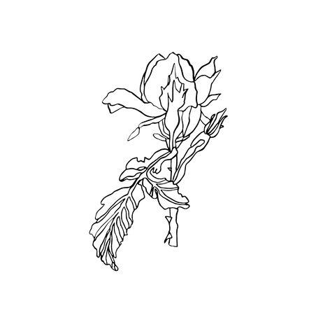 Decorative vector ink drawing rose flower with leaves