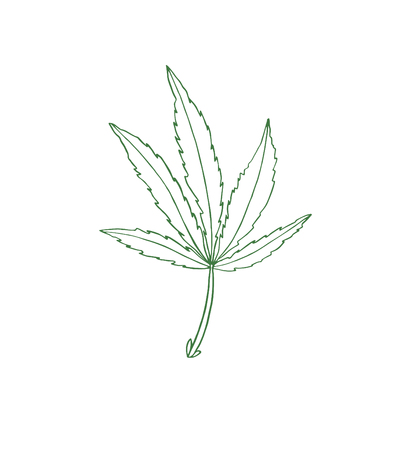 Decorative illustration green leave of big hemp