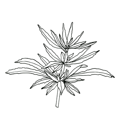 Decorative branch of big hemp with leaves