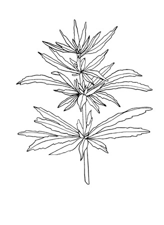 Vector Decorative branch of big hemp with leaves