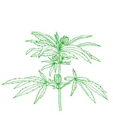 Decorative branch of green hemp with leaves