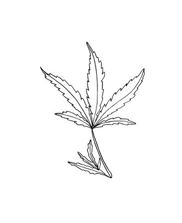Vector Decorative illustration leave of big hemp