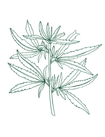 Decorative branch of Green hemp with leaves Stok Fotoğraf