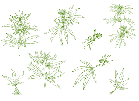Decorative set of green branch of big hemp and leaves Stok Fotoğraf