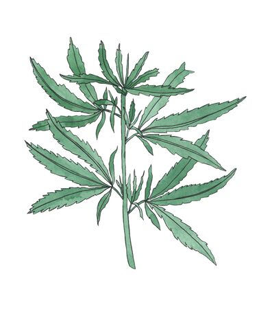 Watercolor branch of Green hemp with leaves