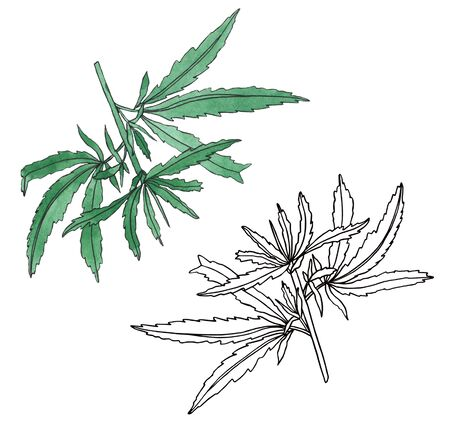 Watercolor and contour branch of Green hemp with leaves Stock Photo