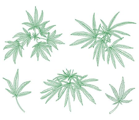 Decorative set of big branch hemp and leaves on white background Stock Photo
