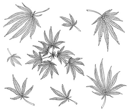 Decorative set of branch of big hemp and leaves on white background Stock Photo