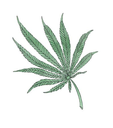 Watercolor illustration branch of Green Hemp leave on white background