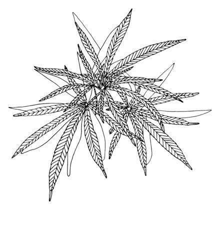 Vector Decorative illustration of big branch hemp on white background Vector Illustration