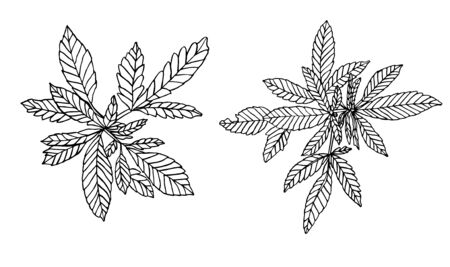 Decorative set of two branch of little hemp and leaves Stock Photo