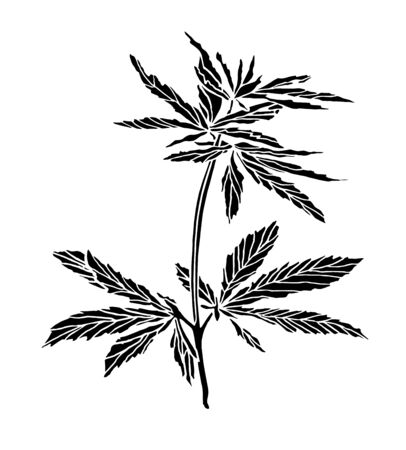 Decorative trafaret of big branch hemp on white background