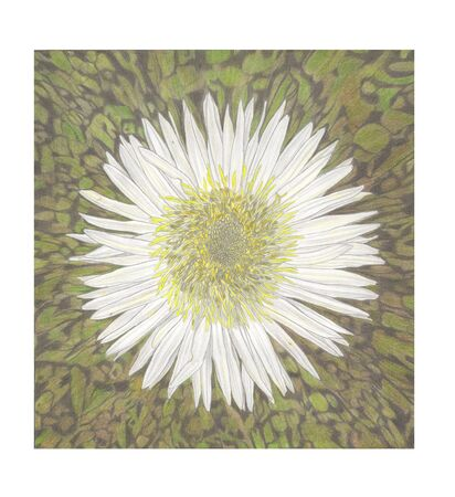 Pencil Hand Drawing illustration of white exotic flower Archivio Fotografico
