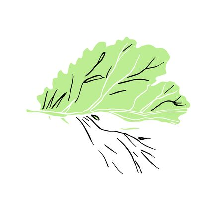 Decorative ink illustration of green leaves with streaky on white background