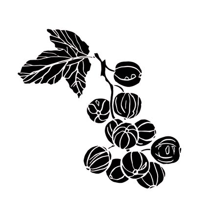 Decorative illustration branch of currant berries with leave on white background Zdjęcie Seryjne