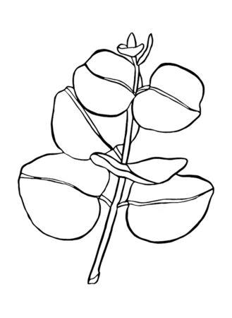Black line eucaliptus leaves branch. Floristic design elements for floristics. Hand drawn illustration. Greeting card. Vecteurs