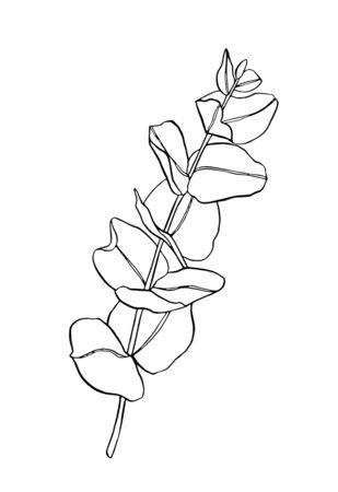 Black line eucaliptus leaves branch. Floristic design elements for floristics. Hand drawn illustration. Greeting card. Floral print