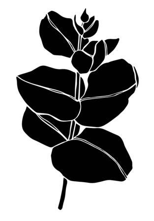 Black line eucaliptus leaves branch. Floristic design elements for floristics. Hand drawn illustration. Greeting card. Floral print Vecteurs