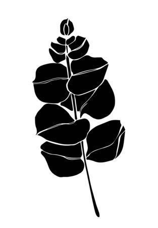 Black line eucaliptus leaves branch. Floristic design elements for floristics. Hand drawn illustration. Greeting card.