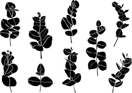 Black set eucaliptus leaves branch. Floristic design elements for floristics. Hand drawn illustration. Greeting card. Floral print