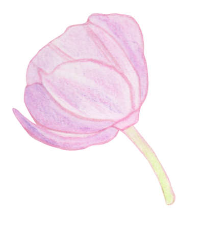 Watercolor gentle little violet pink flower isolated