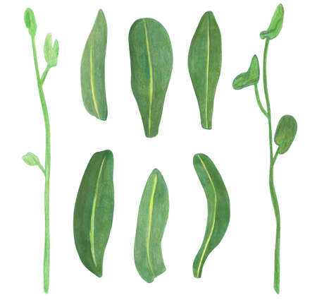 Watercolor set illustration of orchid exotic branch and green leaves