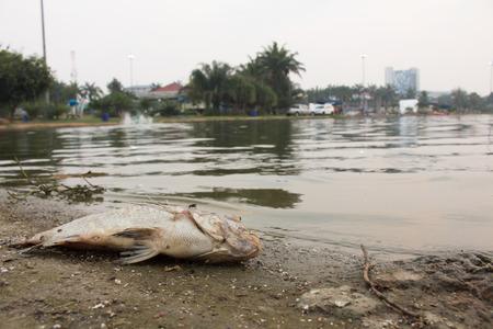 dead fish: pollution,waste water,dead fish