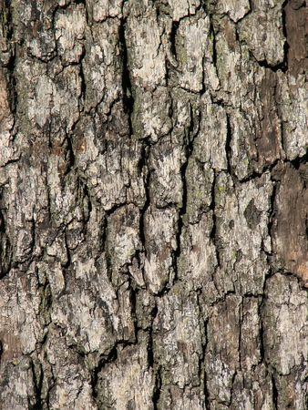 Tree Bark  Foto de archivo - 1951303