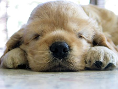 dozing: puppy dozing off