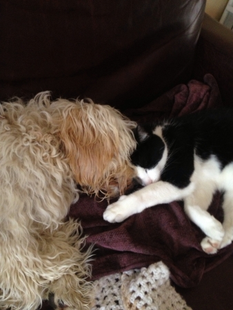 white dog: Secretly love each other when no one is around