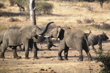 quenched: Elephant - Big five