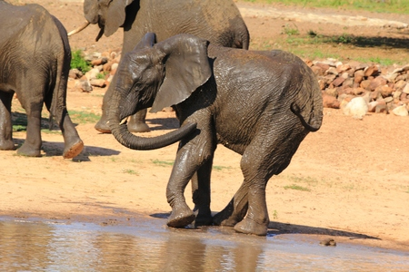 circuses: African Elephant Stock Photo